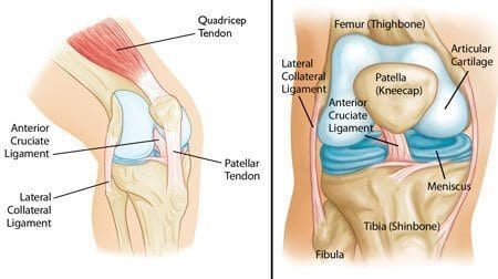 diaphragm of the parts of knee joints that can cause pain