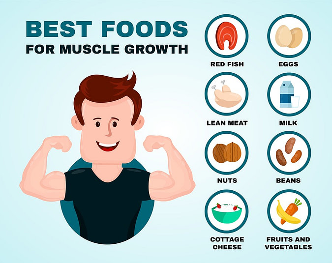 List of the best foods for muscle growth infographic